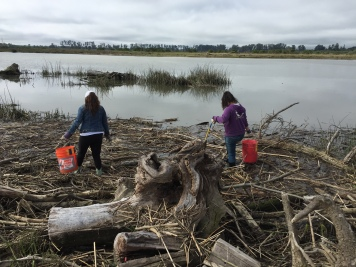 Napa Youth Stewardship members help clean up litter along the Napa River in Kennedy Park. 2016